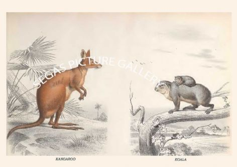 Fine art print of the KANGAROO - KOALA by Édouard Traviès de Villers (1864) reproduced by Segas Picture Gallery.<br />Open Edition